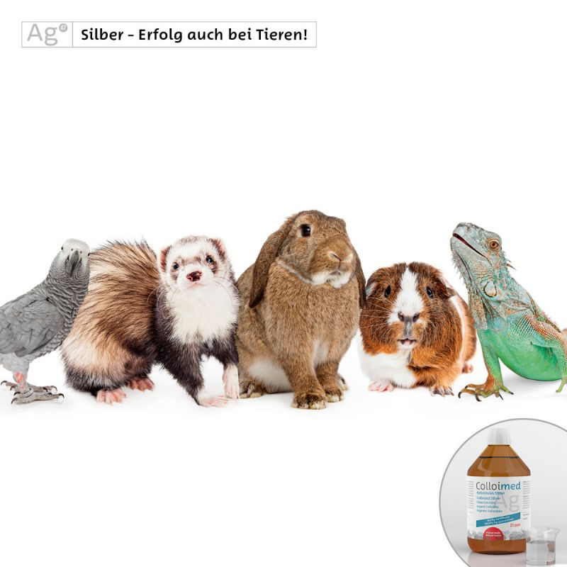 Colloimed kolloidales Silber 500ml - Gesundheit für Kleintiere