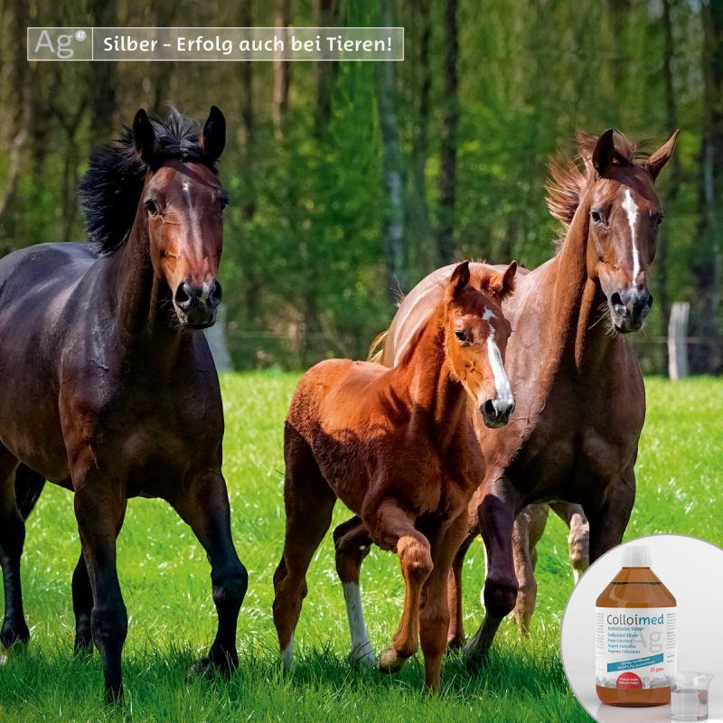 Colloimed kolloidales Silber 500ml - Gesundheit für Pferde